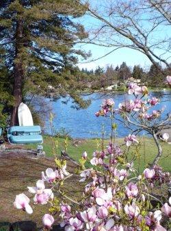 Magnolia in the Spring